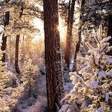 Strahlender Winter