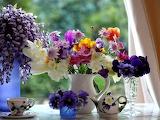 Flores de colores 5