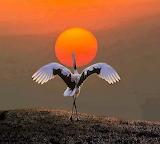 Taniec słońca