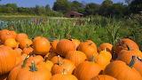 Aaa-fall-harvest-