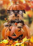 Puppy dog trick or treat