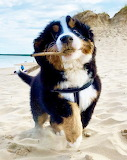 A Brand New Stick For The Beach