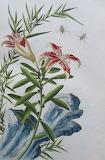 Botanique (7)