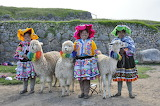Peruvian women with lama