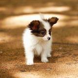 Cute Puppy...