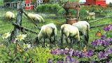 Pleasentvalle Sheep Farm