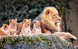 #Baby Lions and Mother