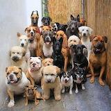 2 dozen dogs