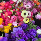^ Ranunculus and anemones