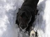 Ranger the snow dog