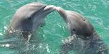 Dolphin-1974975 1920