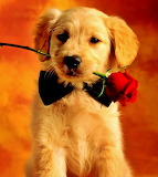 #A Rose Just for You...