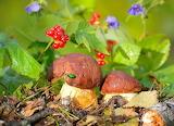грибы 53