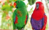 Eclectic parrots