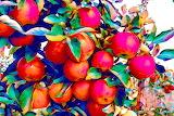 Apples-487