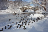 Central Park New York in Winter USA