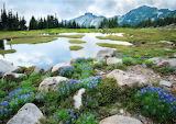 Spray Park Mt. Rainier Washington