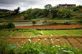 Farm land in Da Lat, Vietnam