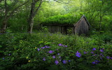 ^ Forest, Spring, Norway, Wildflowers, Hut