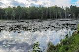 Mile 1592 Roaring Branch Valley Beaver Pond