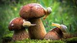 грибы 59