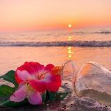 Flower by the seaside
