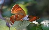 Animals wildlife nature (392)