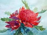 Waratah flower-Painting with watercolors