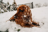 Irish Snow