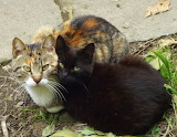 Due Gatti in Toscana
