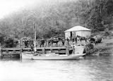 Lilywhite at Pemberton's wharf Mangrove Creek c1900s CCLS Collec