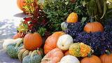#Autumn at the Arboretum- Pumpkin Patch Dallas TX