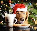 Christmas Doggy (1)