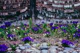 Spring at Memorial Garden