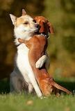 Animals-hugging-34 hugging dogs