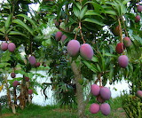 heaven is a tree full of ripe mangos