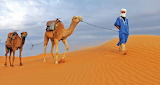 South Morocco camels