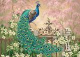 -peacock-