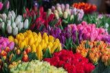 Flowers @ Pinterest...