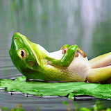 *Daydreaming Frog...