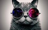 Cat of Destiny