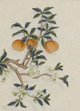 Arbre fruitier MS 387