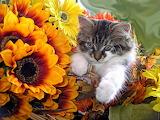 Cute kitty flower basket