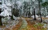 Pervyj-sneg-v-lesu-1920-1200