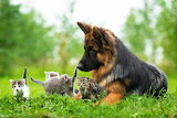 """/POTW/ """"Cats and dogs"""".Dog- guardian."""
