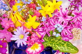 #Colorful Spring Flowers