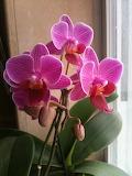 orchid_Feb2013