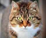 Cat eyes Nice