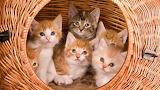 Six Kitten
