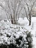 Snow in Cumming, Georgia